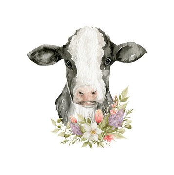 Watercolor cow head and floral bouquets. Domestic animal and floral. Cute farm pet, narcissus, tulip, lilac flower, plant, leaves. Spring design
