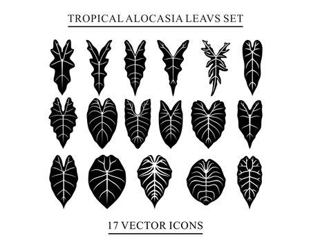 icons tropical alocasia leavs set