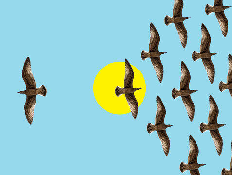 Collage of birds flock in flight with one bird moving in opposite direction