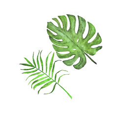 tropical leaves watercolor vector. palm and monstera isolated on white background.