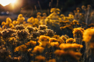 Close-up Of Yellow Flowering Plants On Field - fototapety na wymiar