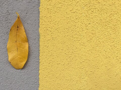 Close-up Of Yellow Leaf Against Background