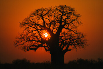 Baobab tree on a beautiful African sunset
