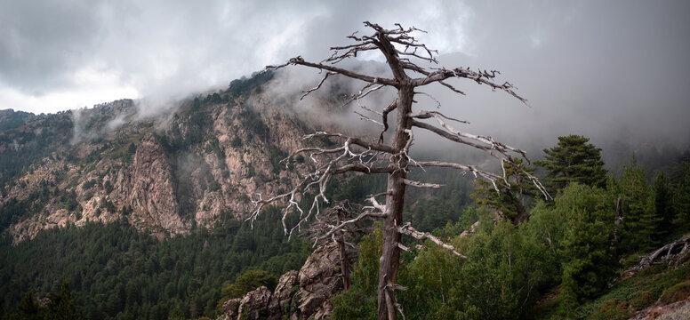 Corsica, panorama dalla foresta di Figarella, Calenzana, Francia
