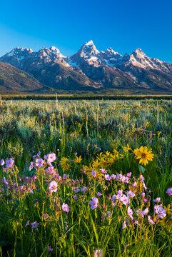 Grand Tetons Flowers