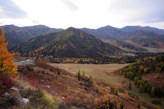 A picturesque aspen valley surrounded by high mountains overgrown with coniferous forest.