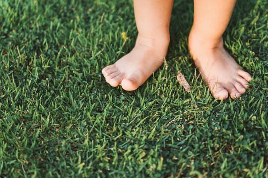 The little girl's feet tread the top of the grass on the green lawn. Some parts of the body. Learn about conceptual physical sensory.