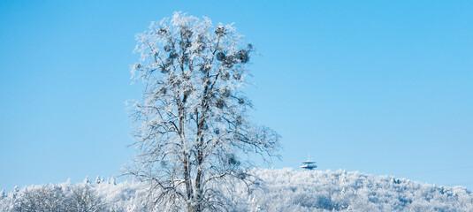 Kaszuby wieżyca zima śnieg drzewo góra
