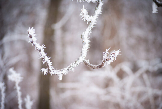 frost covered tree branch