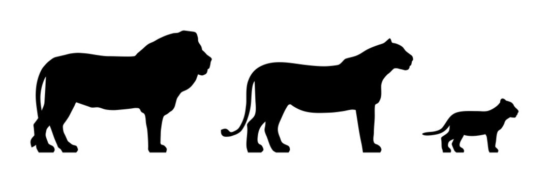 Black silhouettes of standing lion, lioness and cub isolated on white background. Vector illustration