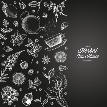 Tea shop vector illustration. Vector design with herbal tea ingredients. Hand drawn sketch collection. Engraved style.