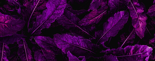 Wall Mural - closeup nature view of purple leaf  background