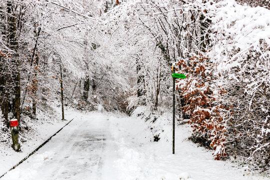 Winter dream X