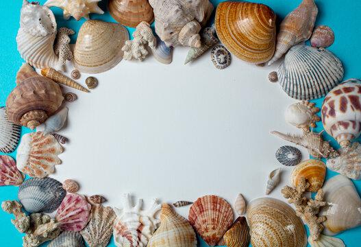 Sea shells on blue background. minimalistic summer bacground