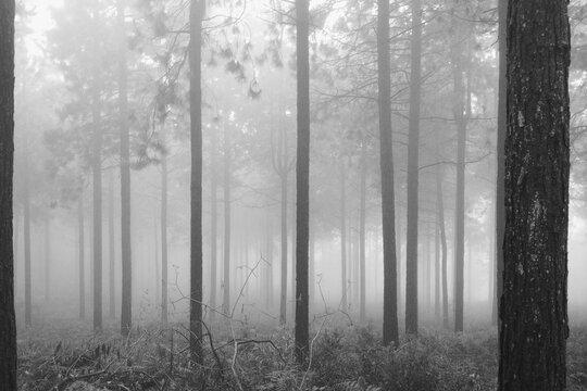 Misty Forrest B&W