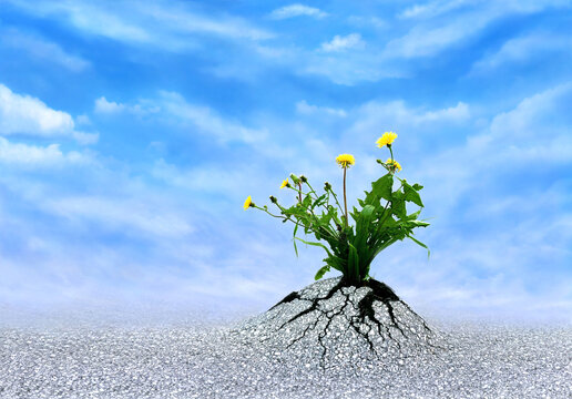 Faith, Hope & Love. Plants breaking trough asphalt with blue sky. Symbol for persistence, never give up, miracles, optimism, a bright future and motivation. Be patient and life will persevere!