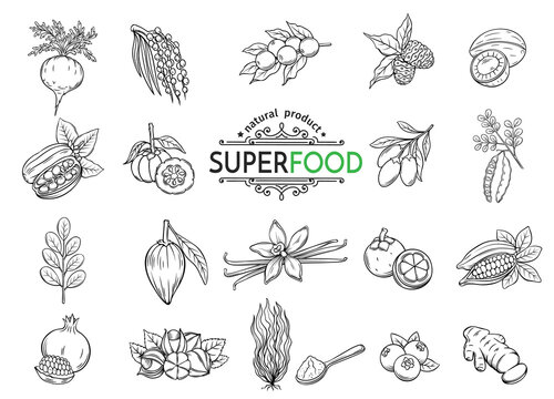 sketch superfood icons set
