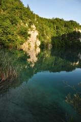 im Wasser gespiegelter Wald
