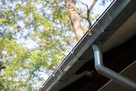 zinc rain gutter and down pipe. dry leaf on rain gutter.