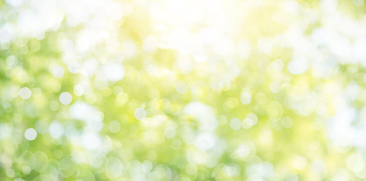 Fresh healthy green bio background with abstract blurred foliage and bright summer sunlight and a central copyspace for your text or advertisment.