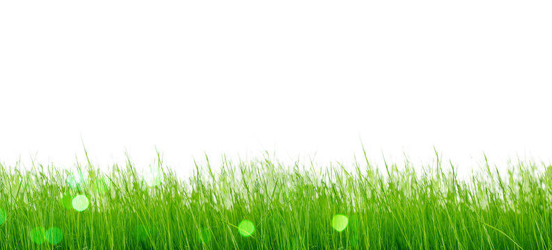 Isolated green grass on a white background.