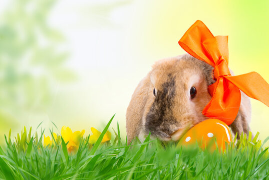 Easter rabbit with easter egg in spring background with frame of grass and leaves on nature.
