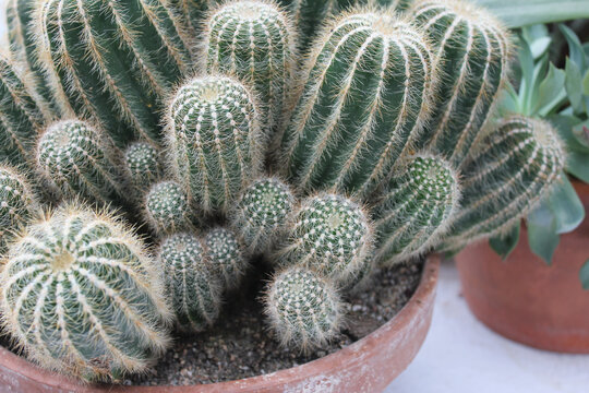 Cactus Famly