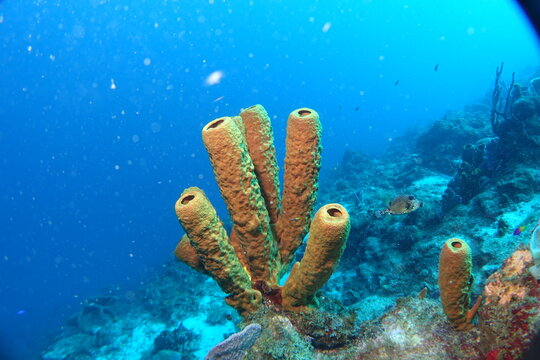 Diving, Wrecks, Caribbean, Windward Islands, Dominica, Guadeloupe, Martinique