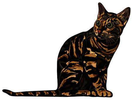 Vector illustration of a Bengal Cat in three color options