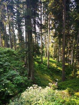 Im Alpenwald