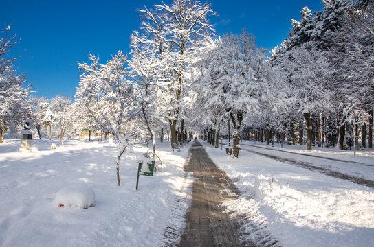 Snow in Bitola city park, Macedonia