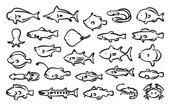 Saltwater fish vector set (Hand draw version)