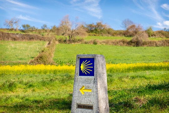 Pilgrimage Way Marking Stone Post with Scallop Shell Symbol and Yellow Arrow Sign in the Spring Field outside Sarria, Galicia on the Pilgrim Trail of the Way of St James Camino de Santiago