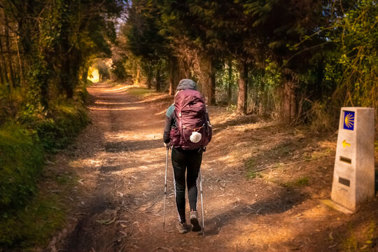 Pilgrim Girl with Hiking Gear Walking in Evening Forest in Galicia Spain along the Way of St James - Camino de Santiago Pilgrimage Trail
