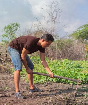Latino farmer plowing the land to plant his crop in virgin soil in Colombia