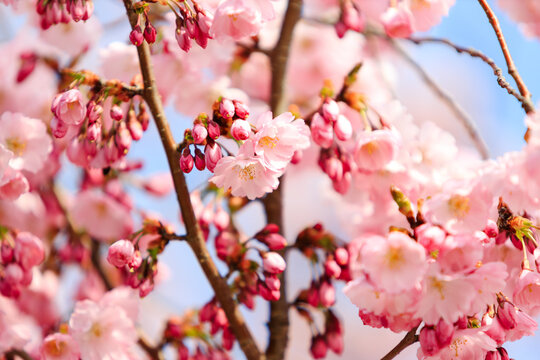 Romantic spring II