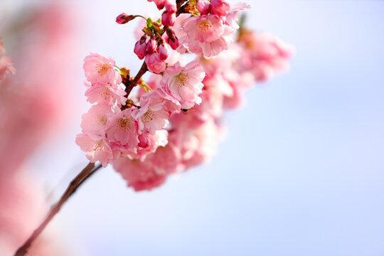 Romantic spring III