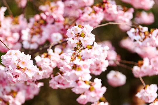 Romantic spring IV