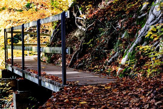 Autumn walkV