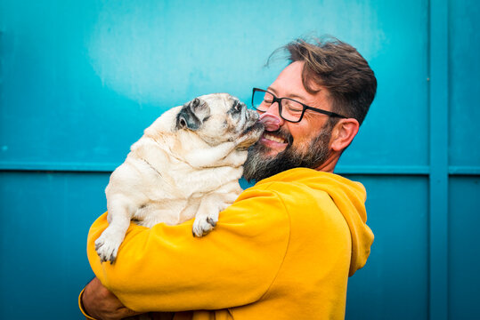My best friend dog concept with funny scene adult man with beard and pug dog kissing him on the face - people and animals have fun and love together in friendship