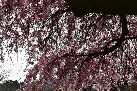 Blüten, Bäume, Pflanzen