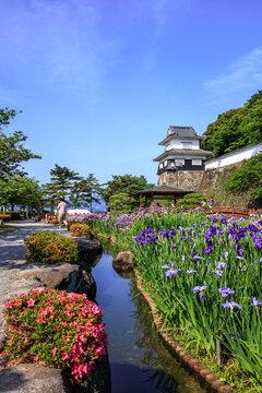 花菖蒲 長崎県大村市大村公園
