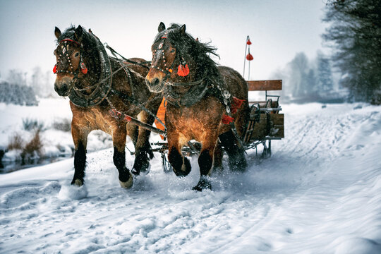 Horse carriage with sled while snowy winter