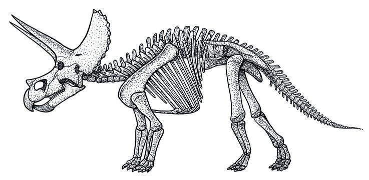 Triceratops skeleton, illustration, drawing, engraving, ink, line art, vector