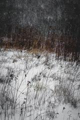 Zimowy las podczas intensywnego opadu śniegu