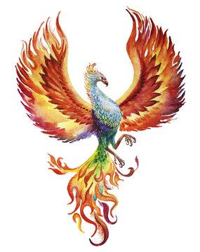 Phoenix bird watercolor illustration on white background