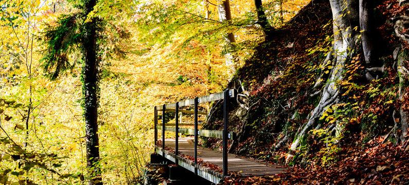 Autumn walk IIII