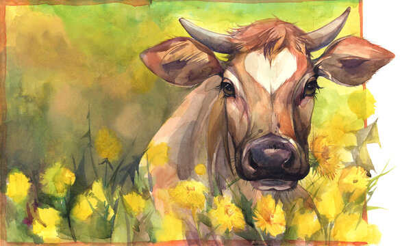 Hand painted watercolor illustration. A cow on the field of yellow flowers.