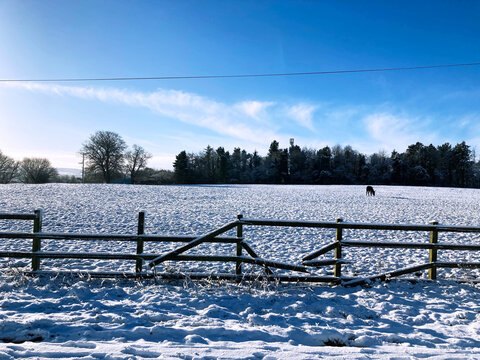 snowy fenced field with horse