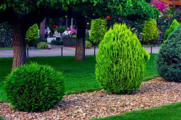 Landscaping of a backyard garden with evergreen conifers and thuja mulched by yellow stone in a spring park with decorative landscape design, on background trees and path nobody.